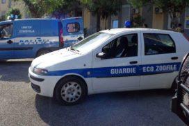 Senza né acqua né cibo, guardie zoofile Oipa salvano 10 cani in una villa a Mondello